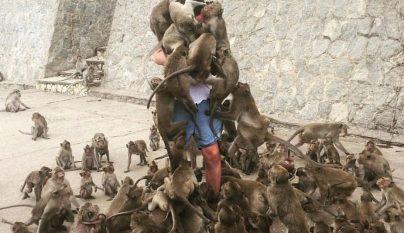 alimentando a los monos 1