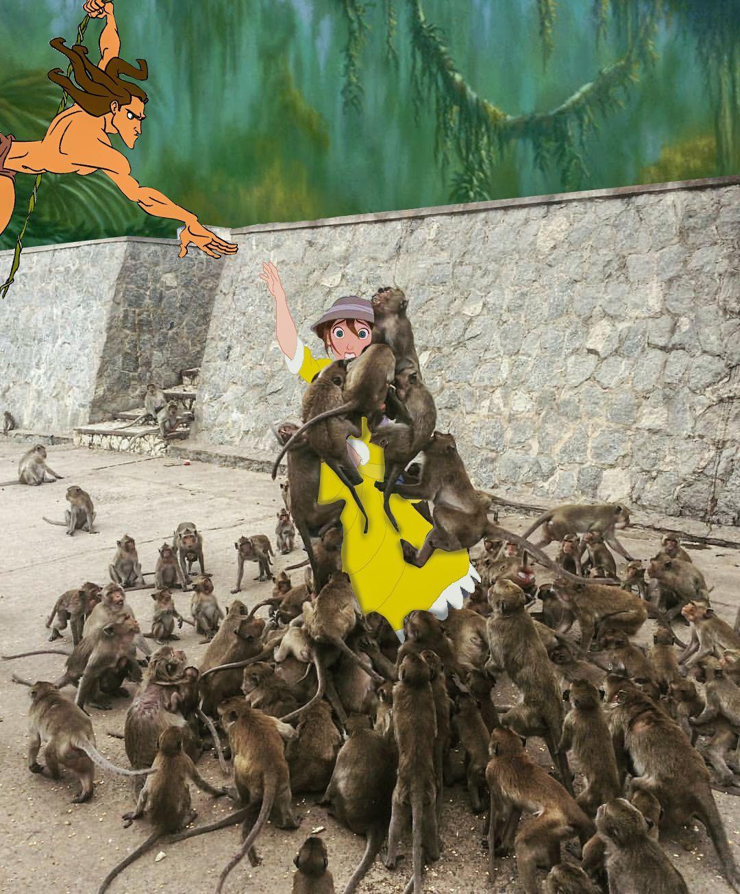 alimentando a los monos 3
