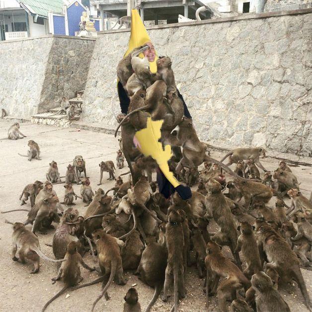 alimentando a los monos 5