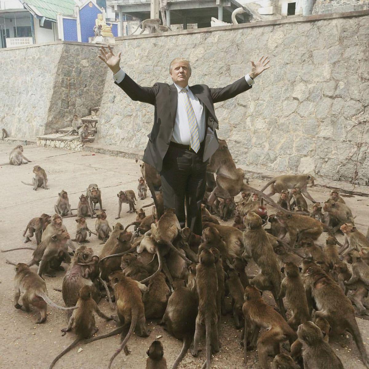alimentando a los monos 7