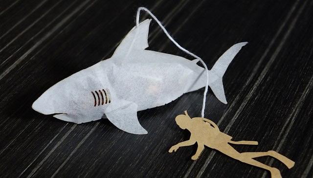 bolsas de te con forma de tiburon 1