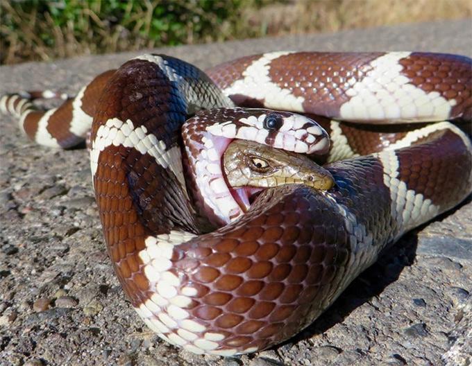 lagarto y serpiente