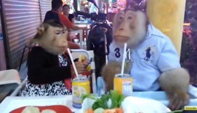monos cenando