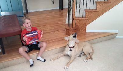 perro nino acordeon