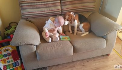 perro y bebe en el sofa