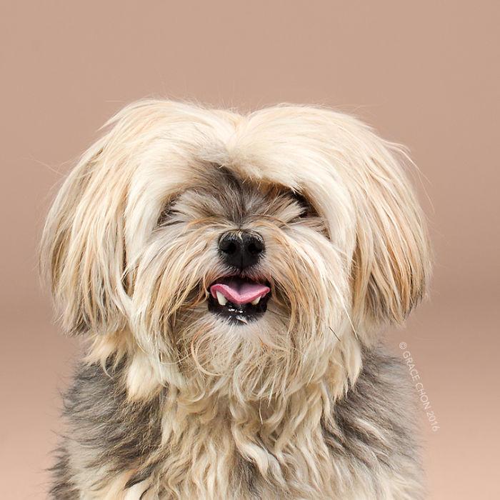 perros peluqueria 1