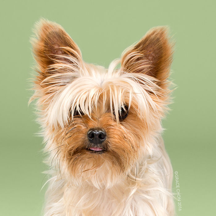 perros peluqueria 11