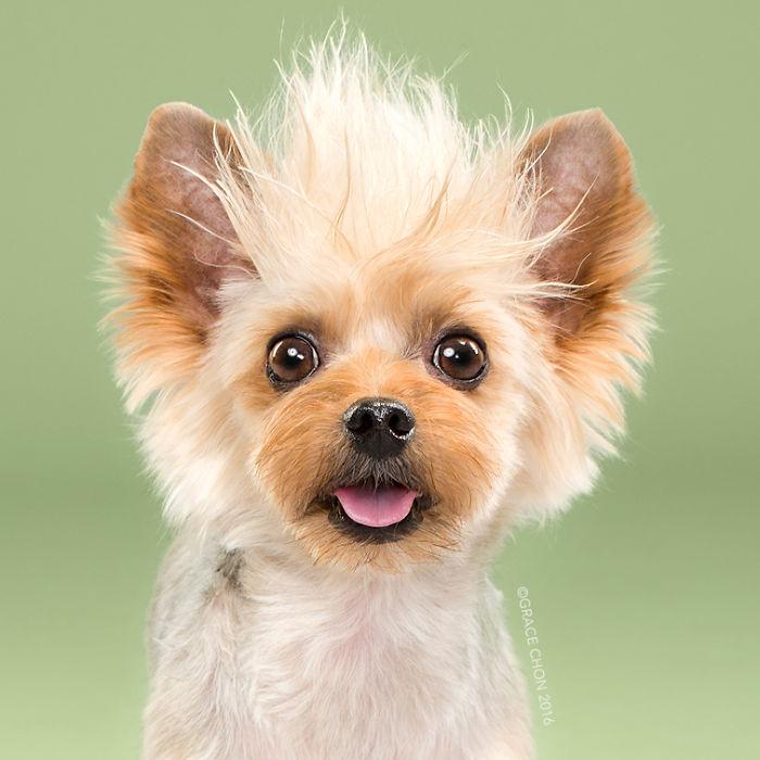 perros peluqueria 12