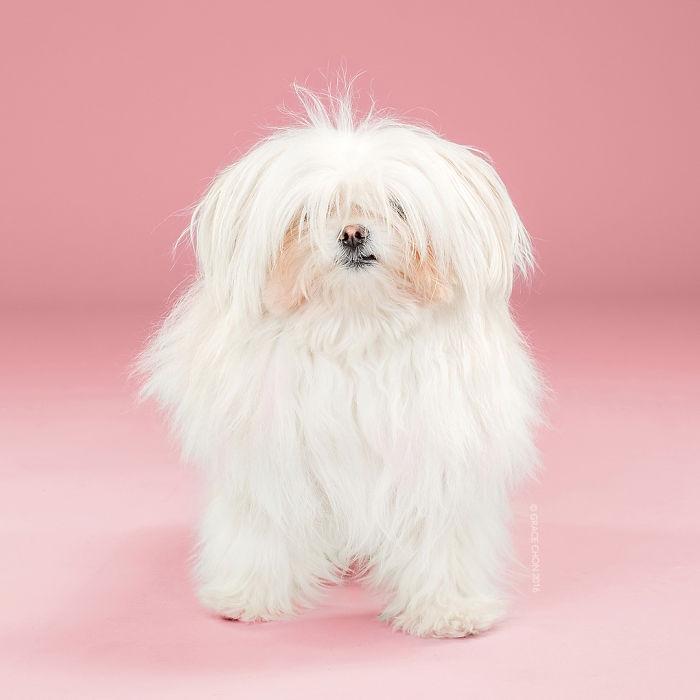 perros peluqueria 13