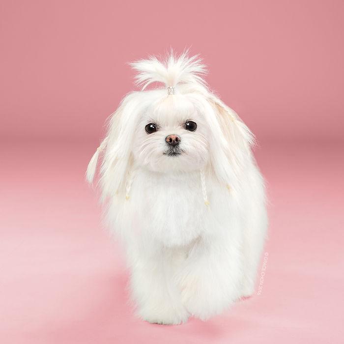 perros peluqueria 14