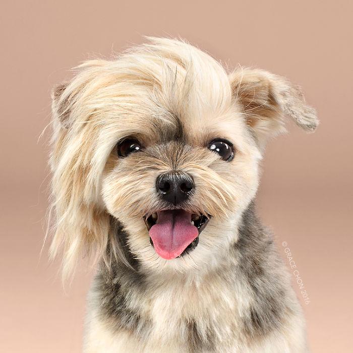 perros peluqueria 2