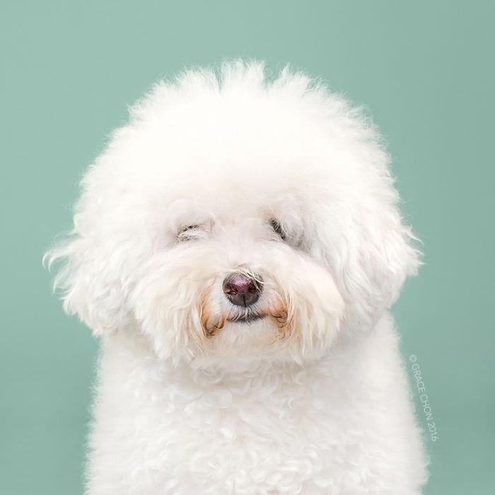 perros peluqueria 3