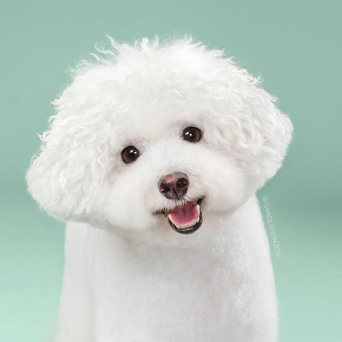 perros peluqueria 4