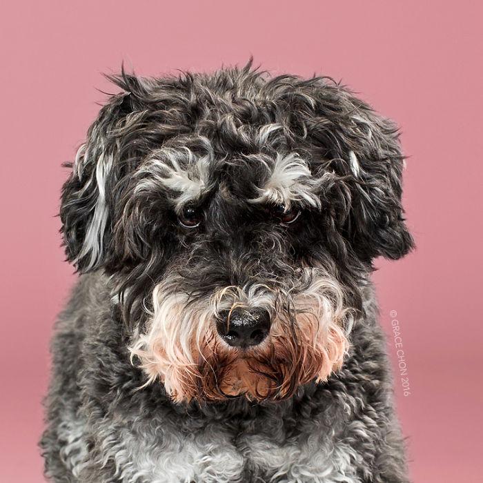 perros peluqueria 5