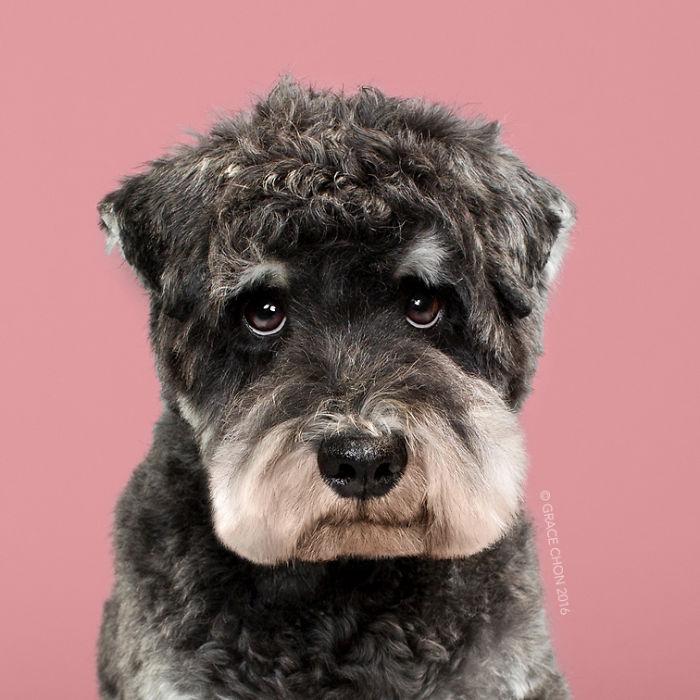 perros peluqueria 6