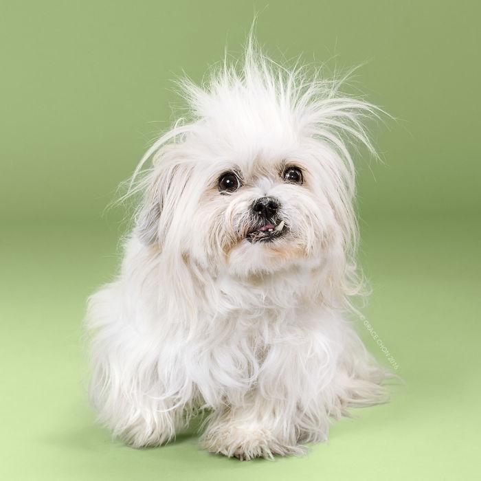 perros peluqueria 7