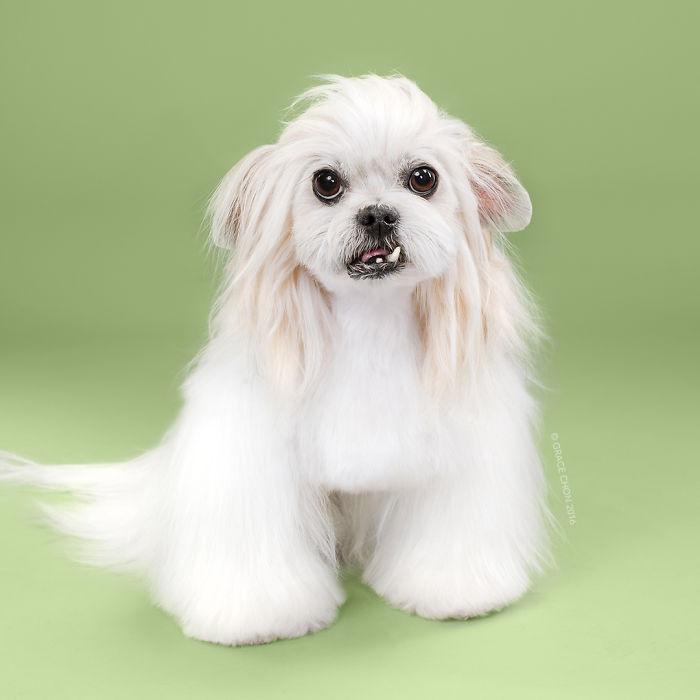 perros peluqueria 8