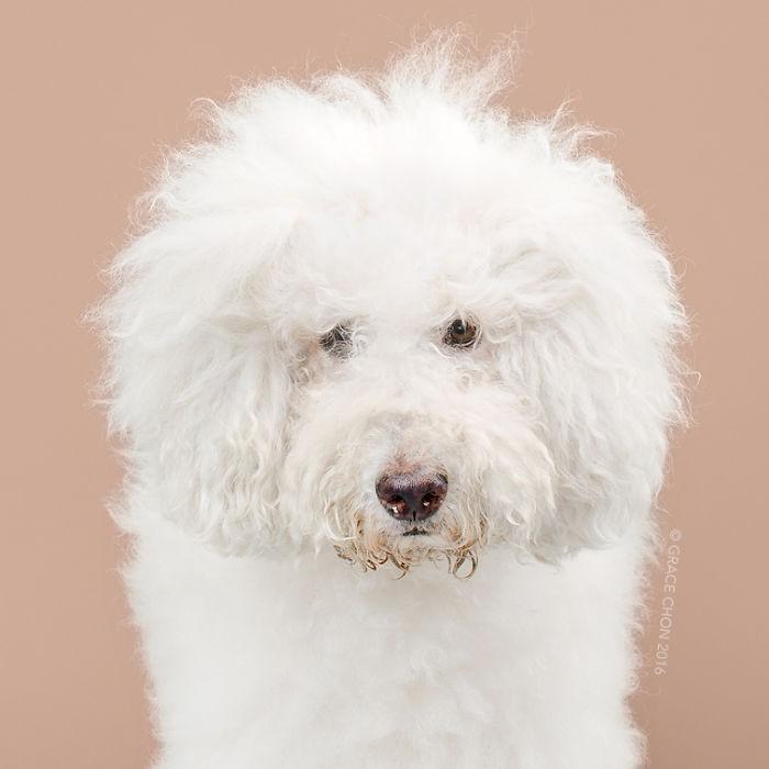 perros peluqueria 9