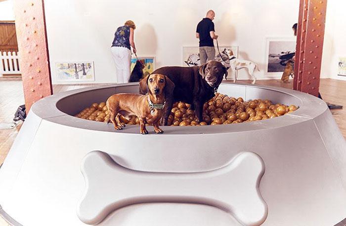 arte para perros 3