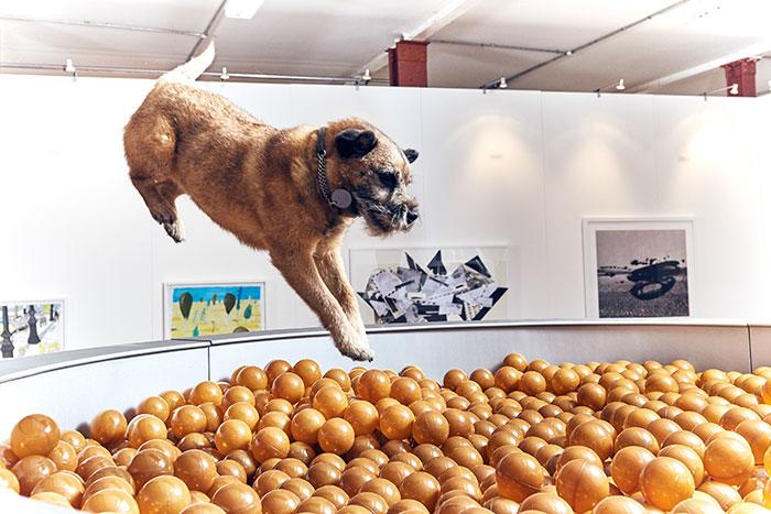 arte para perros 4