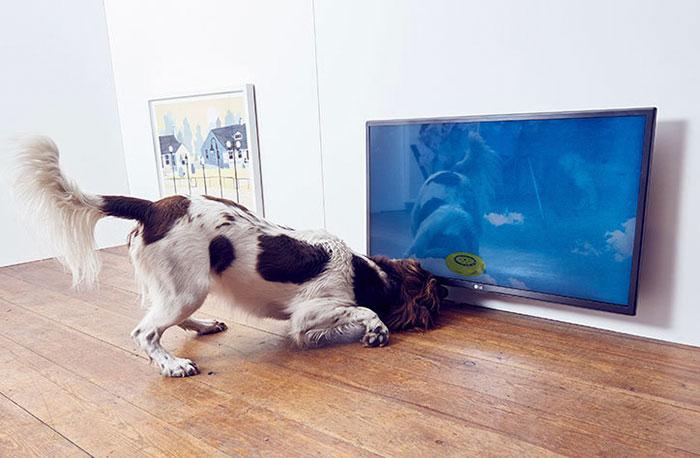 arte para perros 5