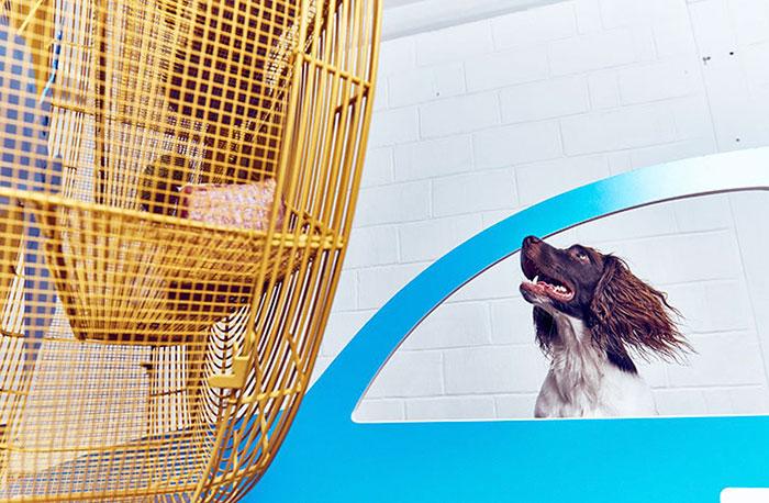 arte para perros 7