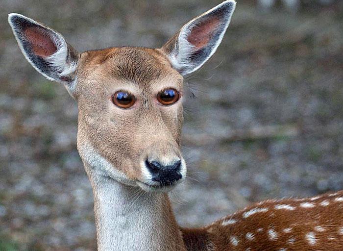 animales-con-ojos-en-la-frente-5