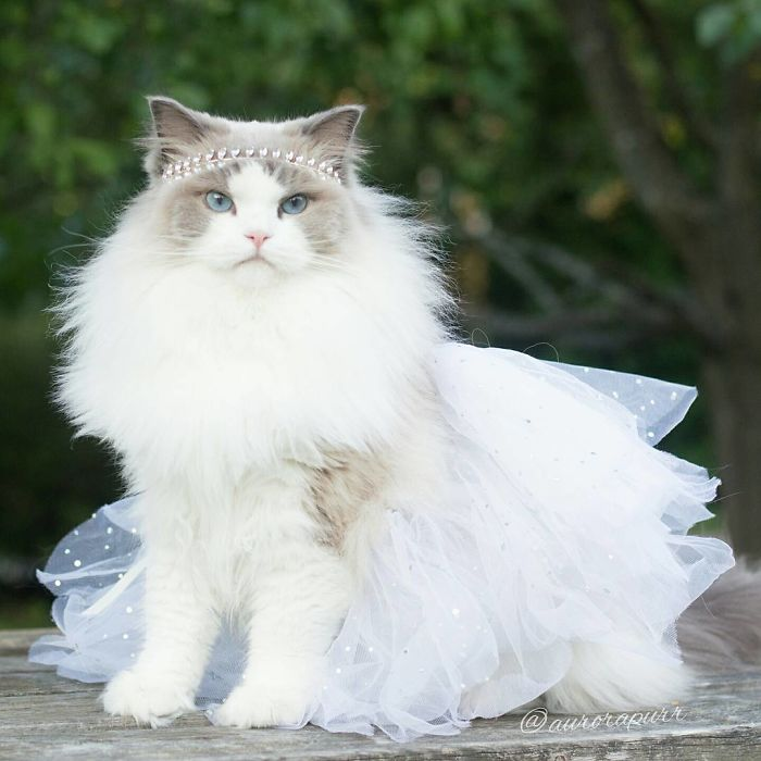 aurora gata princesa 5