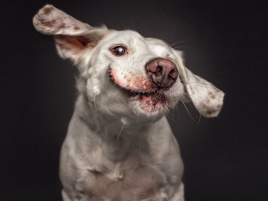 fotos-perros-comida-12