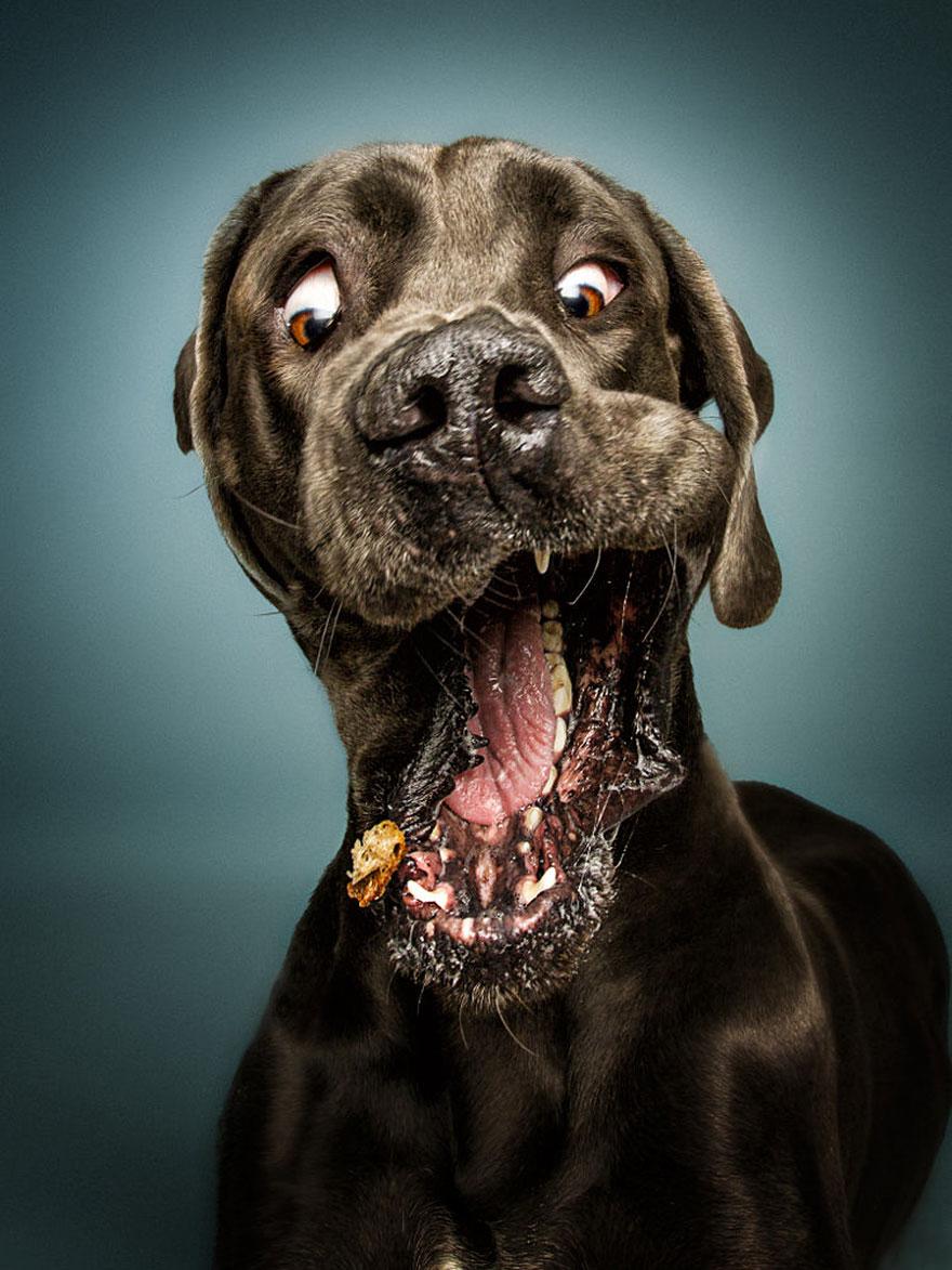 fotos-perros-comida-2