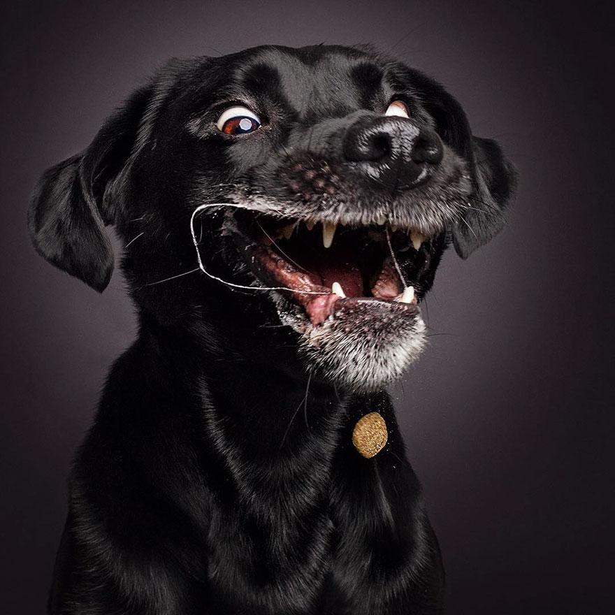 fotos-perros-comida-3