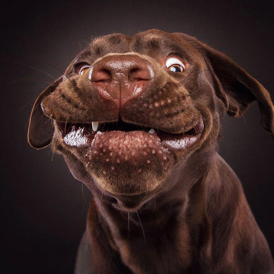 fotos-perros-comida-4