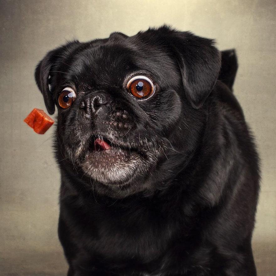 fotos-perros-comida-7