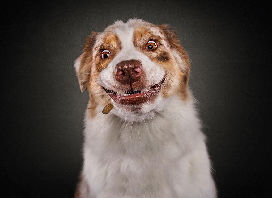 fotos-perros-comida-9