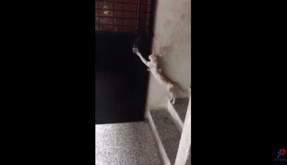 gato-con-educacion