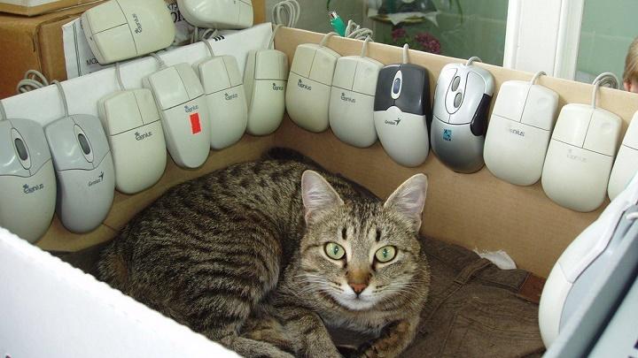 gato-rodeado-de-ratones