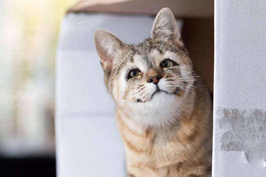 gatos-sin-parpados-1