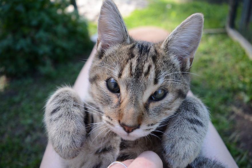 gatos-sin-parpados-6