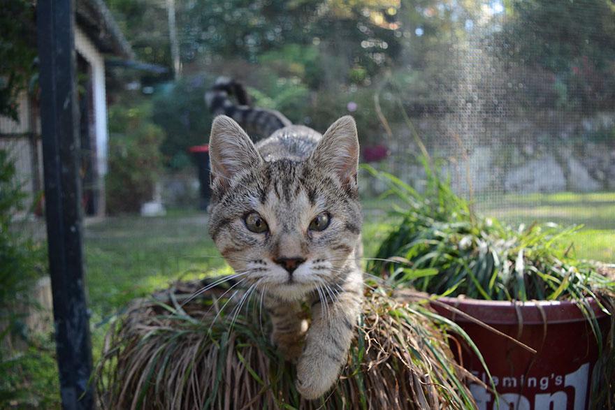 gatos-sin-parpados-7