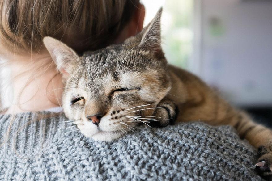 gatos-sin-parpados-8