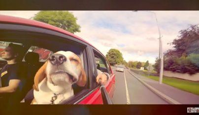 perro-en-el-coche