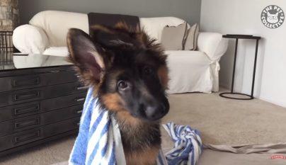 perro-fotogenico