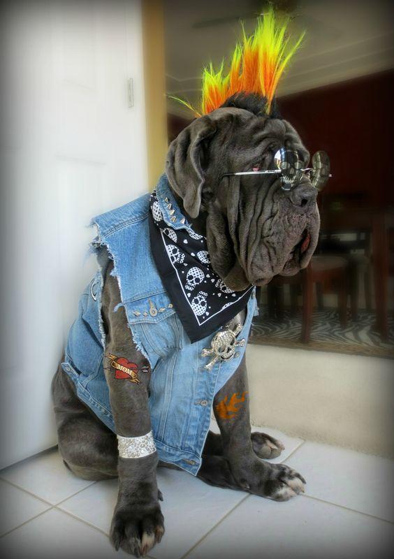 perro-punky