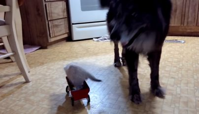 perro-y-gato