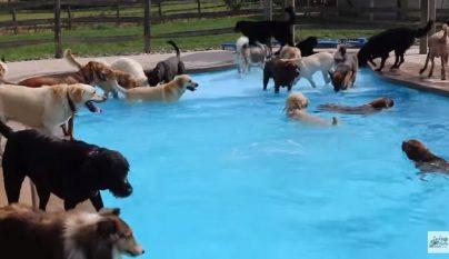 piscina-perros