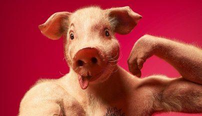 animales-haciendose-un-selfie-1