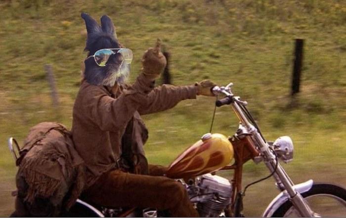 conejo-con-gafas-9
