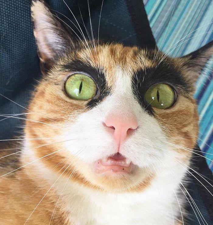gato-con-cejas-1