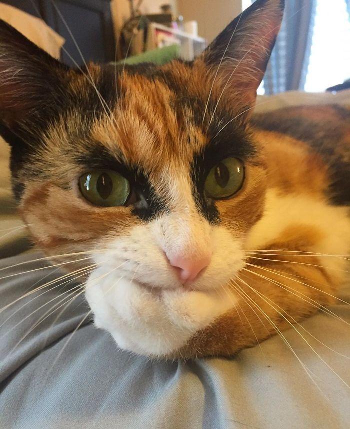 gato-con-cejas-3