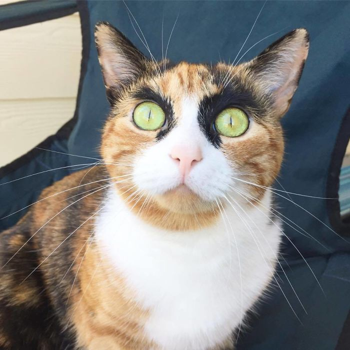 gato-con-cejas-6